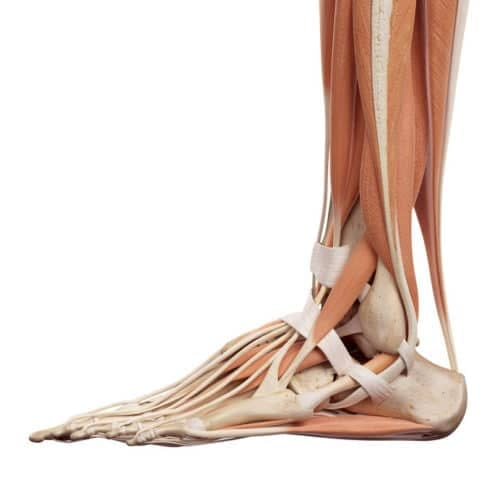 Calf and foot muscles can restrict mobility.